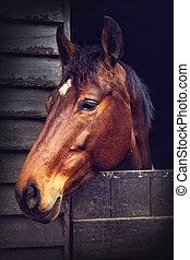 bruin paard, in, stal