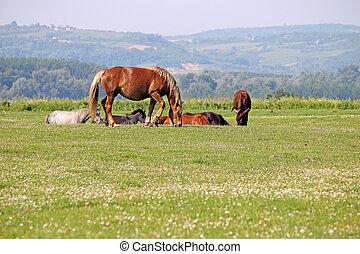 bruin paard, op, wei, welen seizoen op