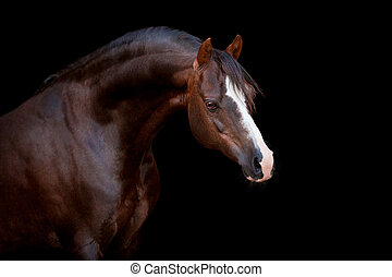 bruin paard, vrijstaand, op, black