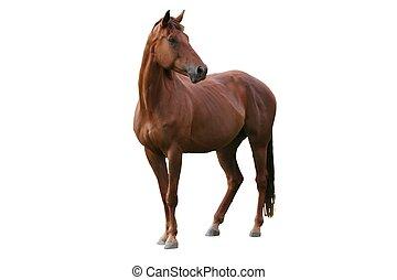 bruin paard, vrijstaand