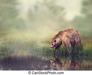 bruine beer, dichtbij, de, vijver