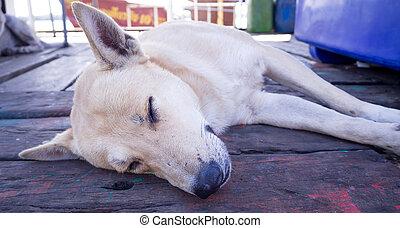 bruine hond, verdwaald