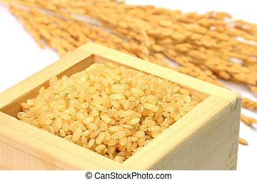 bruine , oor, rijst, sprouted