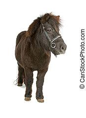 bruine pony