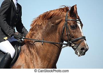 bruine , sportende, paarde, verticaal, gedurende, tonen
