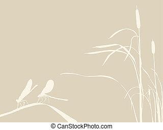 bruine , twee, illustratie, achtergrond, vector, libel