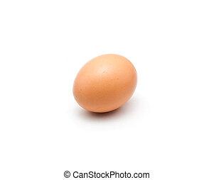 bruine , vrijstaand, enkel, wit ei, chicken