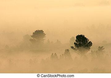 brume, arbres