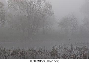 brume, matin