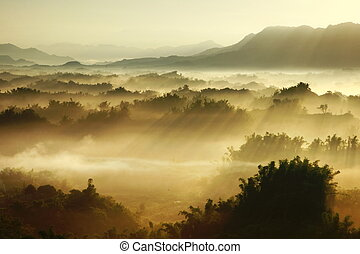 brume, matin, soleil