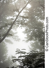 brumeux, arbres