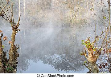 brumeux, aube, rivière, forêt