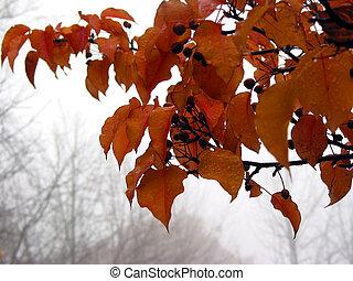 brumeux, automne