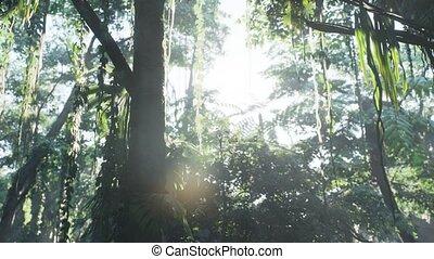 brumeux, brouillard, jungle, rainforest