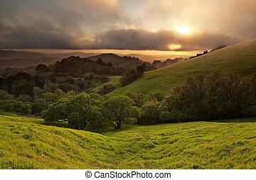 brumeux, californie, pré, coucher soleil