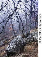 brumeux, chaîne de montagnes, forêt, demerdzhi, fantômes, vallée