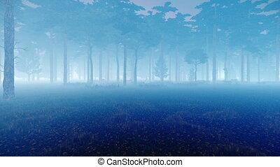 brumeux, crépuscule, pin, forêt automne, brumeux, 4k