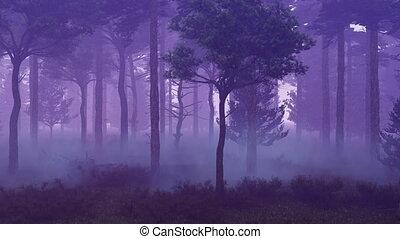 brumeux, défaillance, coucher soleil, 4k, temps, forêt