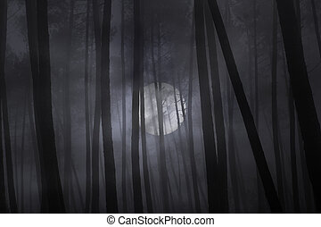 brumeux, entiers, forêt, night., lune