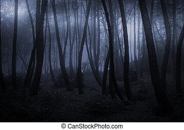 brumeux, forêt, soir