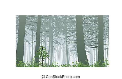 brumeux, inspirer, maxwell, monter, scène, rainforest