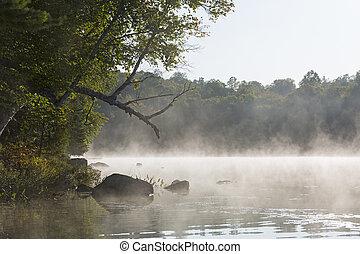 brumeux, matin, sur, a, lac, dans, tard, été, -, ontario, canada