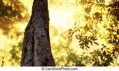 brumeux, matin, tôt, forêt