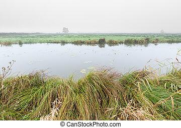 brumeux, pays-bas, matin, rural, paysage rivière