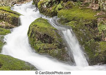 brumeux, pays boisé, chute eau
