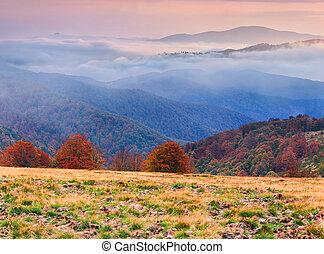 brumeux, paysage automne, dans, montagnes., levers de soleil