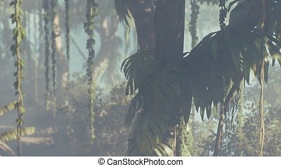 brumeux, rainforest, brouillard, jungle