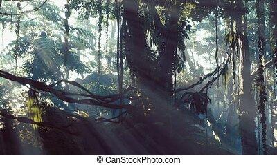brumeux, rainforest, jungle, brouillard