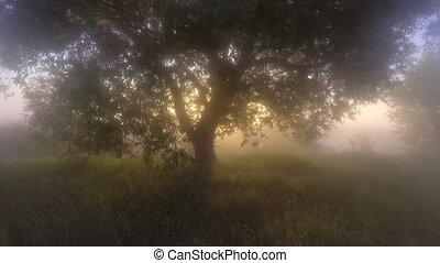 brumeux, rayons soleil, forêt