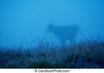 brumeux, vache, foyer., sélectif, field., fog., pâturage