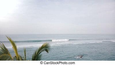 brummen, bewegen, vorwärts, unter, tropische , palmen, auf,...