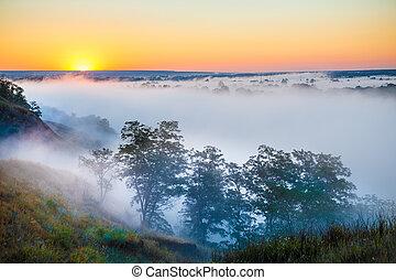 brumoso, amanecer, encima, valle, y, el, bosque
