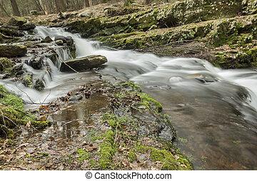 brumoso, bosque, cascada