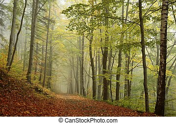 brumoso, bosque de otoño