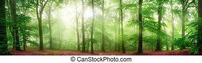 brumoso, bosque, panorama, con, suave, rayos de la luz