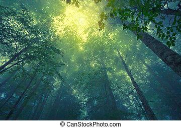 brumoso, bosque