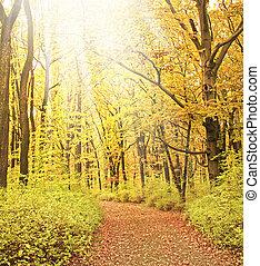 brumoso, camino, en, bosque