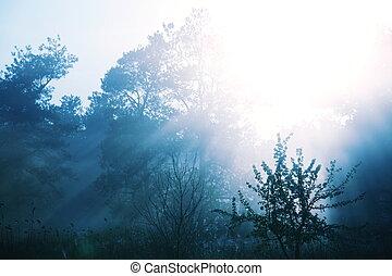 brumoso, de, bosque