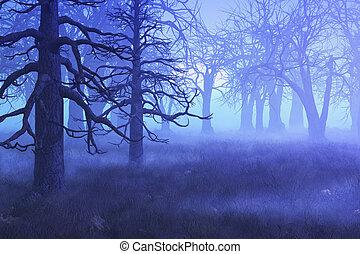 brumoso, mañana, bosque