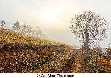 brumoso, mañana, en, transylvania