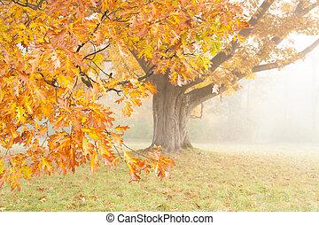 brumoso, neblina, roble, brillante, amarillo