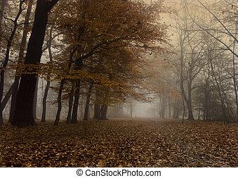 brumoso, otoño