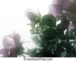 brumoso, rosas