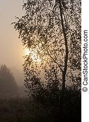 brumoso, sol, árbol, contra, mañana, esfera, abedul