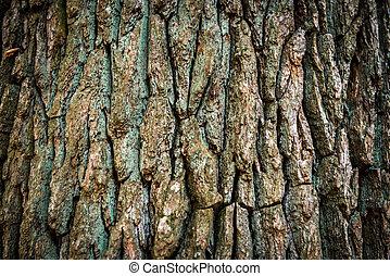 brun, écorce, chêne