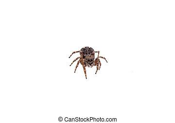 brun, blanc, araignés, fond